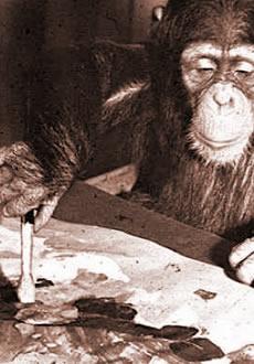 book_cover_chimp