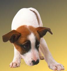 shy_puppy